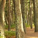 Brownsea Island forest