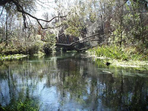 unitedstates florida kayaking ichetuckneeriver fortwhite ichetuckneespringsstatepark 113kmwofjacksonville