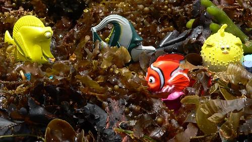 Nemo's playground