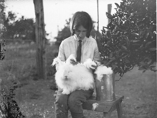 Girl with a white angora rabbit, 1930s / by Sam Hood