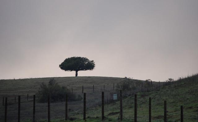 Header of singletree
