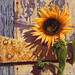 """The Old Factory Sunflower""- oil painting by Camille Engel"