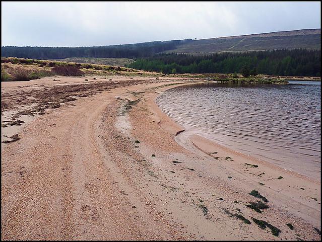 Loch Grannoch shoreline.