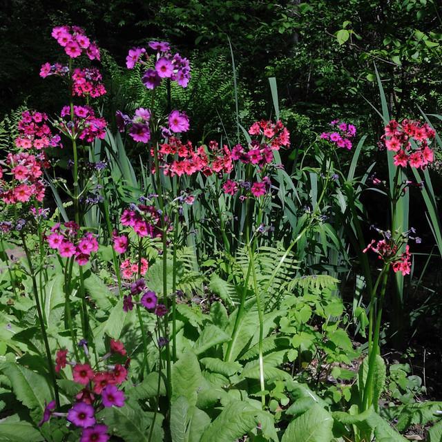 Nj Botanical Gardens Ringwood Flickr Photo Sharing