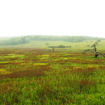 Big Meadow, Skyline Drive - morning mist
