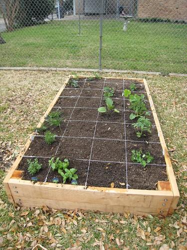 Filling the raised vegetable garden bed erin covert for Vegetable garden plots design