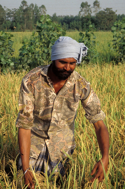 Farmer from India