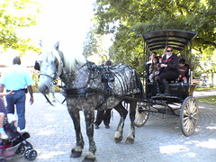 horse and buggy(0.0), cart(0.0), vehicle(1.0), pack animal(1.0), coachman(1.0), horse harness(1.0), land vehicle(1.0), carriage(1.0),