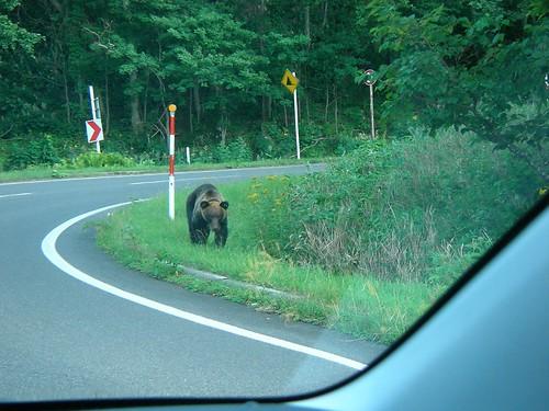 �q�O�}�ڌ�(�m��) Ezo Brown Bear!