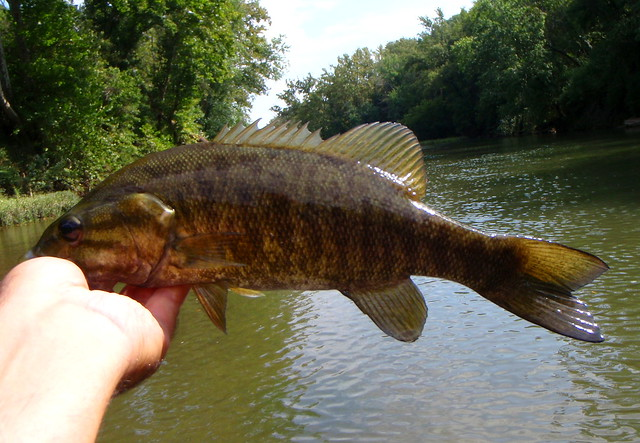 Duck river smallmouth flickr photo sharing for Smallmouth river fishing