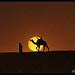 Tuareg & Camel, Libya ! by Bashar Shglila
