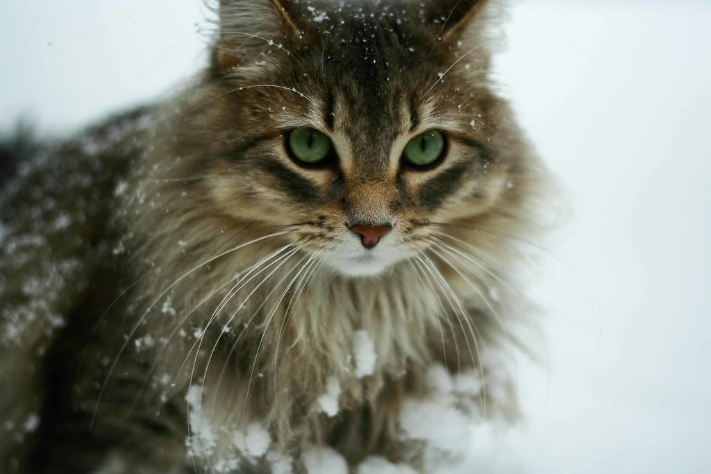Feral cats will be thankful for your DIY outdoor shelter this winter!