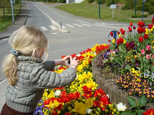 Tulipes au milieu de la route (26)
