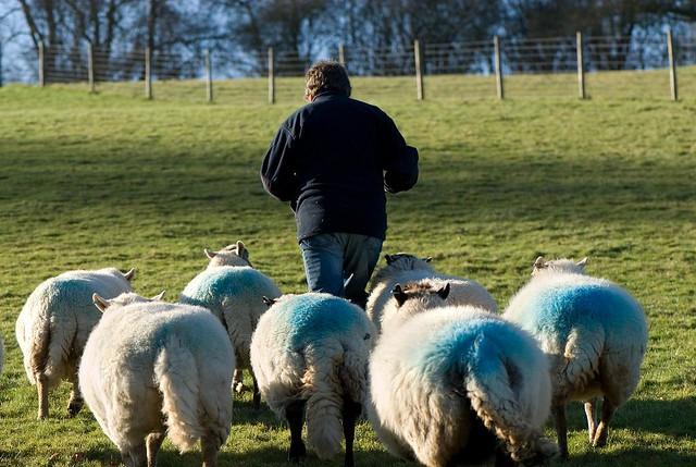 Following like sheep! ...