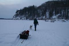 The world 39 s best photos of burbot and fairbanks flickr for Fishing in fairbanks alaska