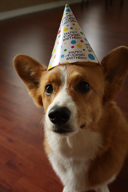 Corgi Birthday Wishes