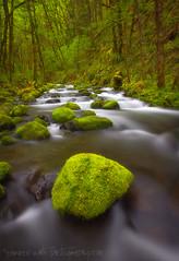 Soft Moss Creek