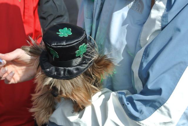 Fun Dog Show - March 1, 2014