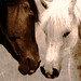 Lady And The Stud aka Love Is In The Air by Big Grey Mare
