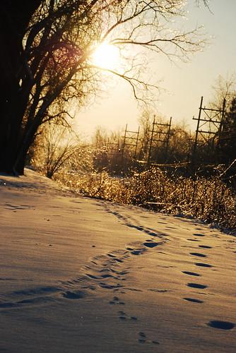 trees winter sunset snow ice silhouette tracks iowa
