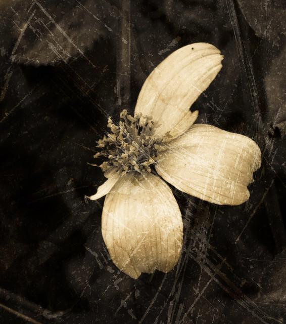 flor antigua