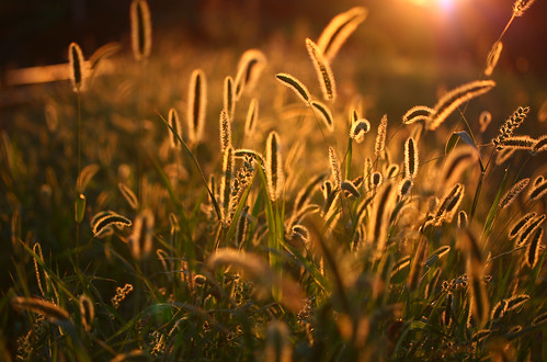 light sunset summer stilllife sunlight plant grass backlight dark golden weed flora hungary sundown personal outdoor budapest perspective gaz illuminated explore environment 60mm exploration gettyimages illuminate shallowdepth depthless sonofsteppe pusztafia gyom kőbánya adoredlights