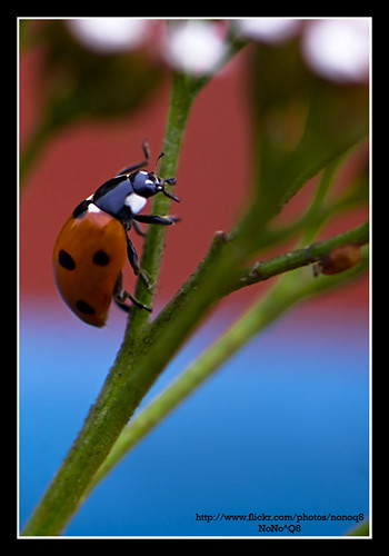 Day 35: Ladybird in The Garden