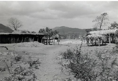 Wagogo shamba, Dodoma Region, Tanzania. 1968. View on black.