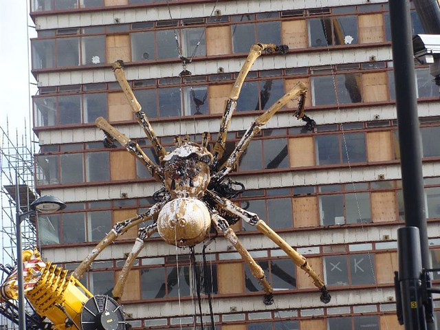 Biggest spider in the world.