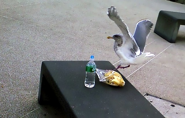 Bird Stealing Food | Flickr - Photo Sharing!
