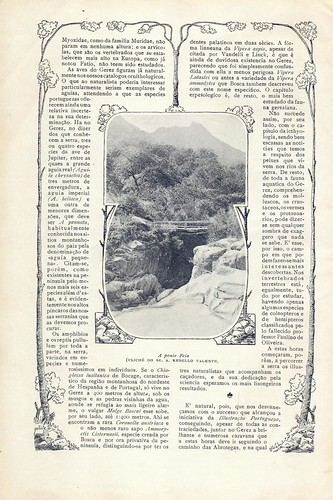 Illustração Portugueza, No. 133, September 7 1908 - 31