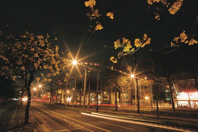 夜攝-黃金風鈴木
