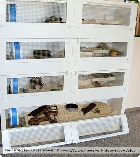 1000 images about cage ideas on pinterest rat cage for Guinea pig cage made from bookshelf
