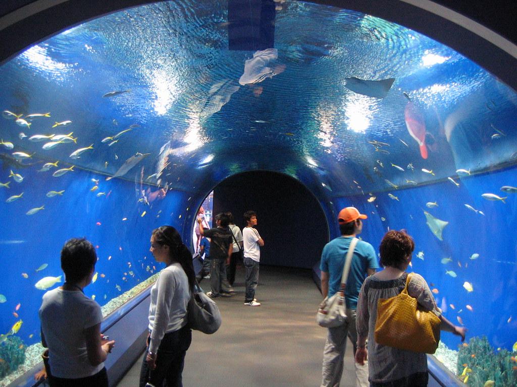 Acuario de Osaka, Japón