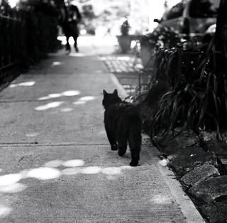 Black Cat Walks In Bokeh Into Bokeh