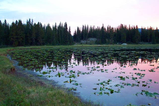 Lilypad Lake 3