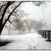 Fog VII by Lisa-S