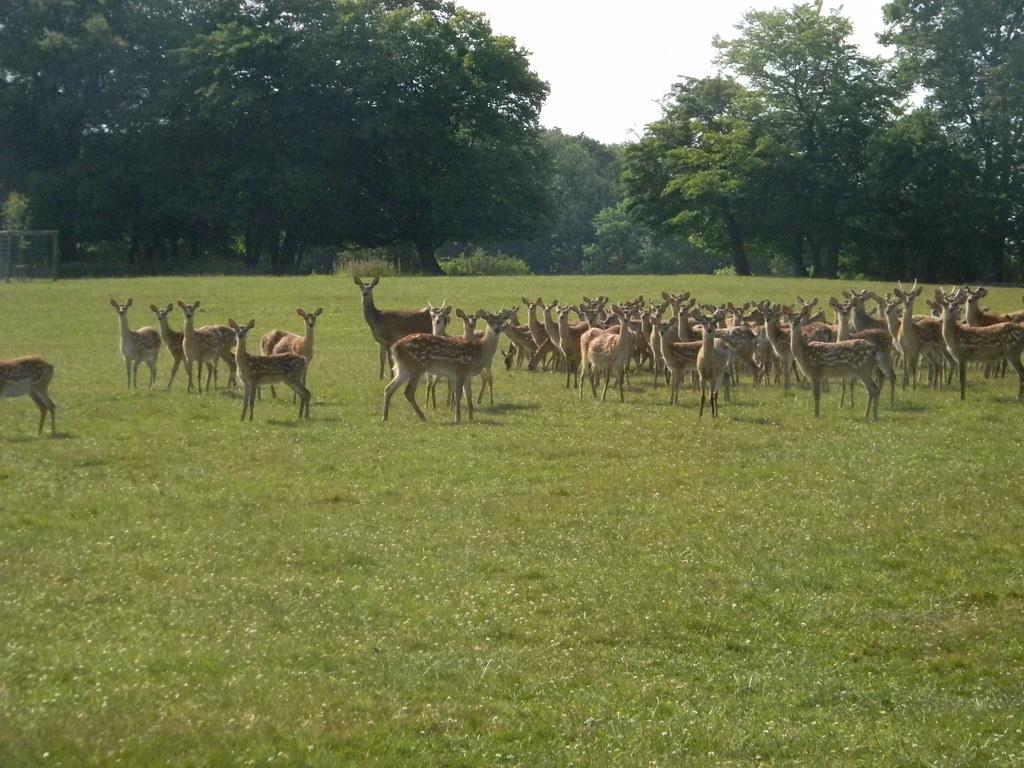 Deer Wadhurst Park, Wadhurst Circular