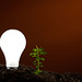 Light Bulb and Plant by Nick Carver Photography