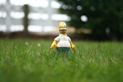 Homer in/on the grass 100/365