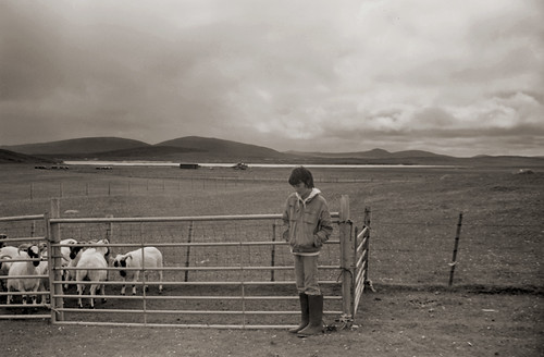 Berneray Sheep Boy