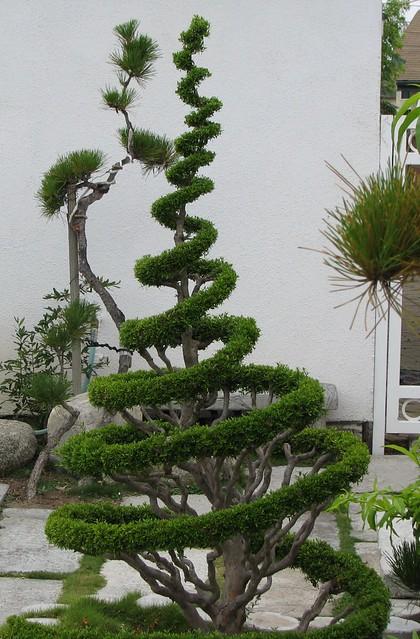 dr seuss tree