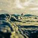 dune by SARAΗ LEE