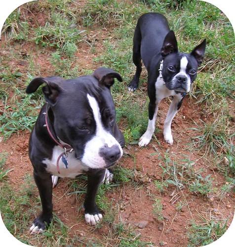 Baxter and Bonnie