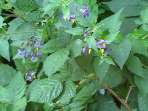 seattle, arboratum, arboretum, plants IMG_1330