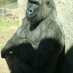 Los Angeles Zoo 028