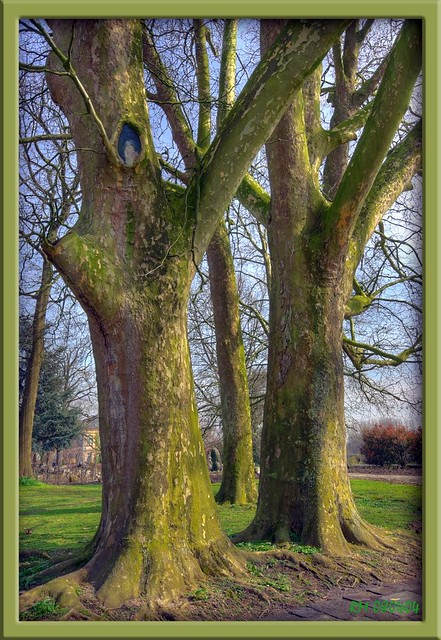 1341 Strory telling trees (3)