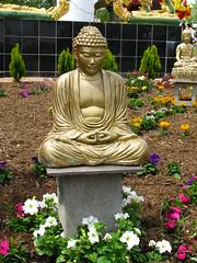 Buddha Image at Wat Lao Buddhavong