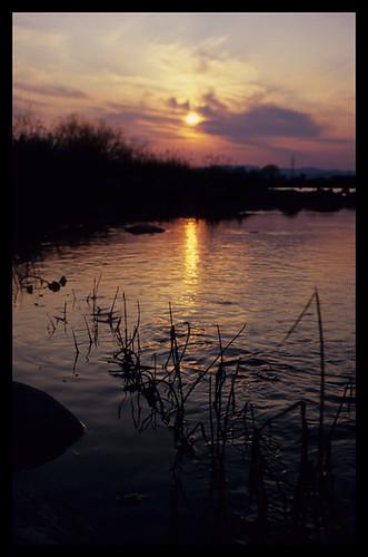 sunset river geotagged nikon fujifilm 135 fukui 夕日 fortia 福井 kuzuryu newfm2 釣り 50mmf12ais 九頭竜川 流れ 45mmf28p ainikkor fujichromefortiasp 釣行 geo:lat=361006389 geo:lon=1363127886