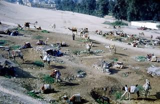 cairo camel camp egypt pugh family photos862
